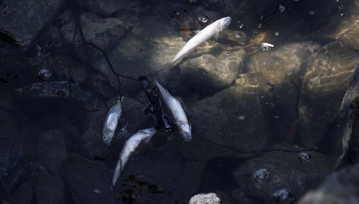 Küçükçekmece'de balık ölümleri giderek artıyor