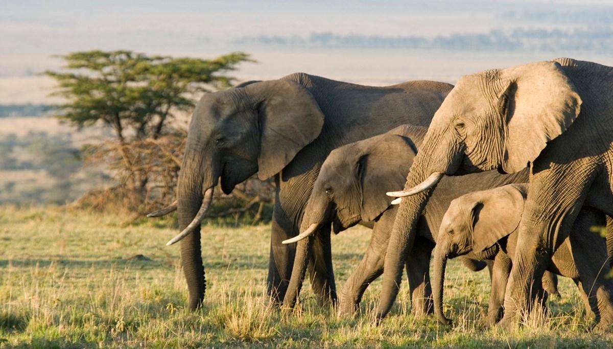 Nambiya'da halka uyarı: Fil dışkısı Covid-19'u tedavi etmiyor