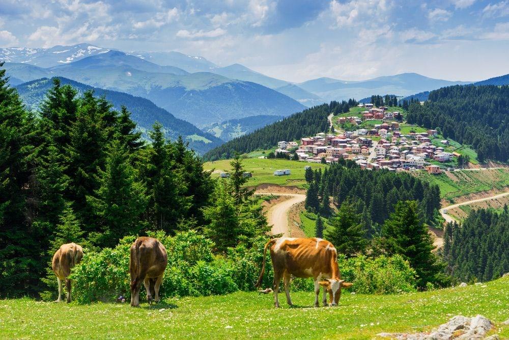 Doğu Karadeniz'in saklı cennetleri (Yayla tatili önerileri) - 4