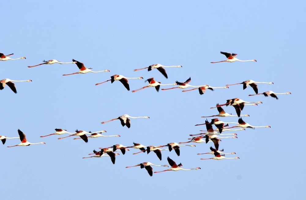 Van Gölü'nde flamingo şöleni - 7