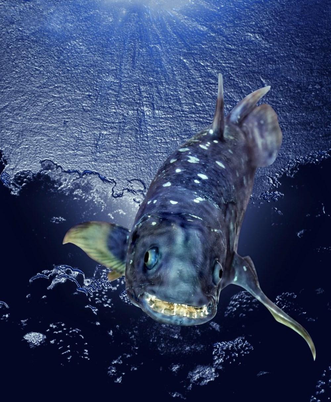Yeni keşif: 'Yaşayan fosil' balık 100 yıl yaşıyor, hamileliği 5 yıl sürüyor - 3