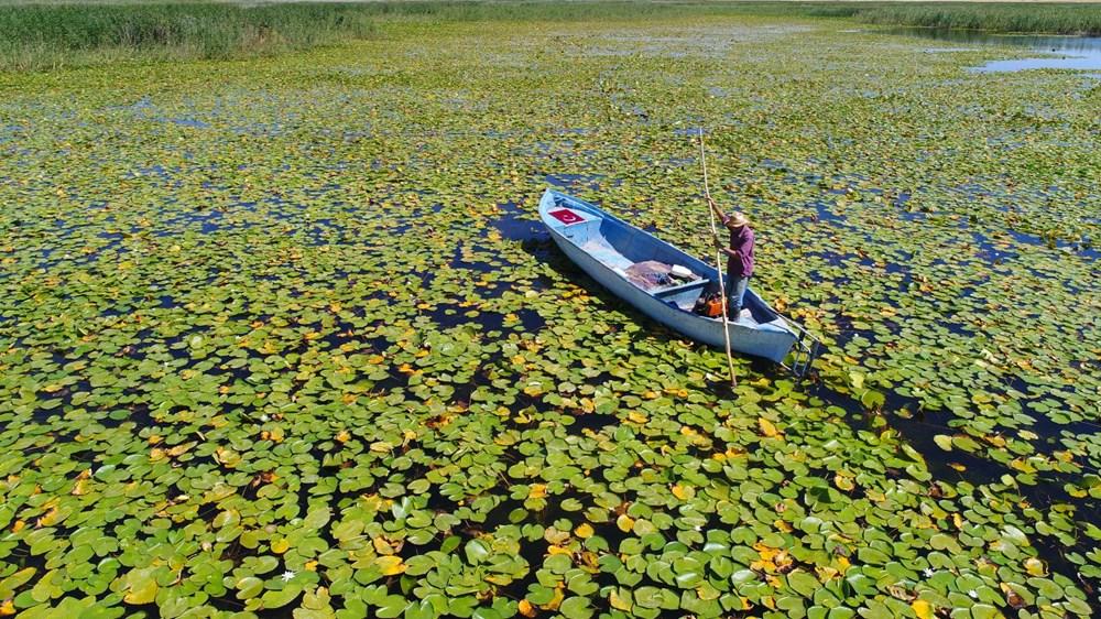 Türkiye'nin en büyük nilüfer bahçesi: Beyşehir Gölü - 2