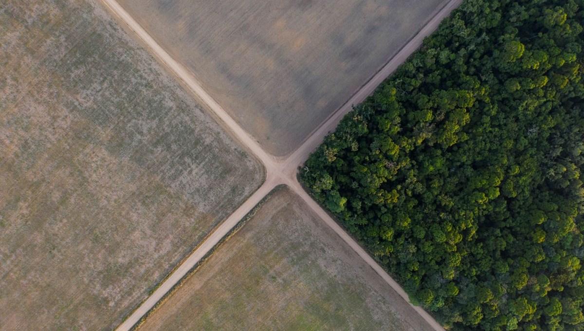 Gezegen için harekete geçin çağrısı: İklim değişikliği ve biyoçeşitlilik kaybı