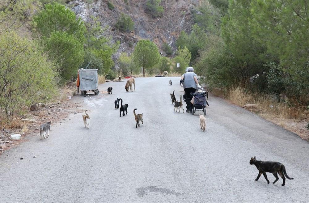 Her gün 200 sokak kedisini elleriyle besliyor - 3