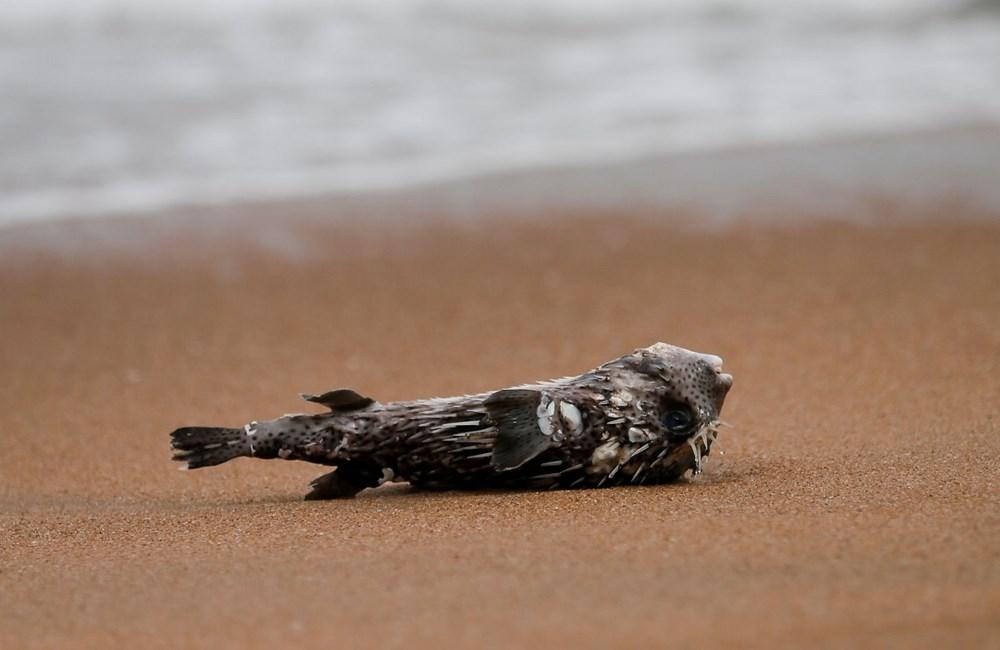 Yüzyılın en kötü çevre felaketlerinden: Onlarca yunus, balina ve kaplumbağa kıyıya vurdu - 2