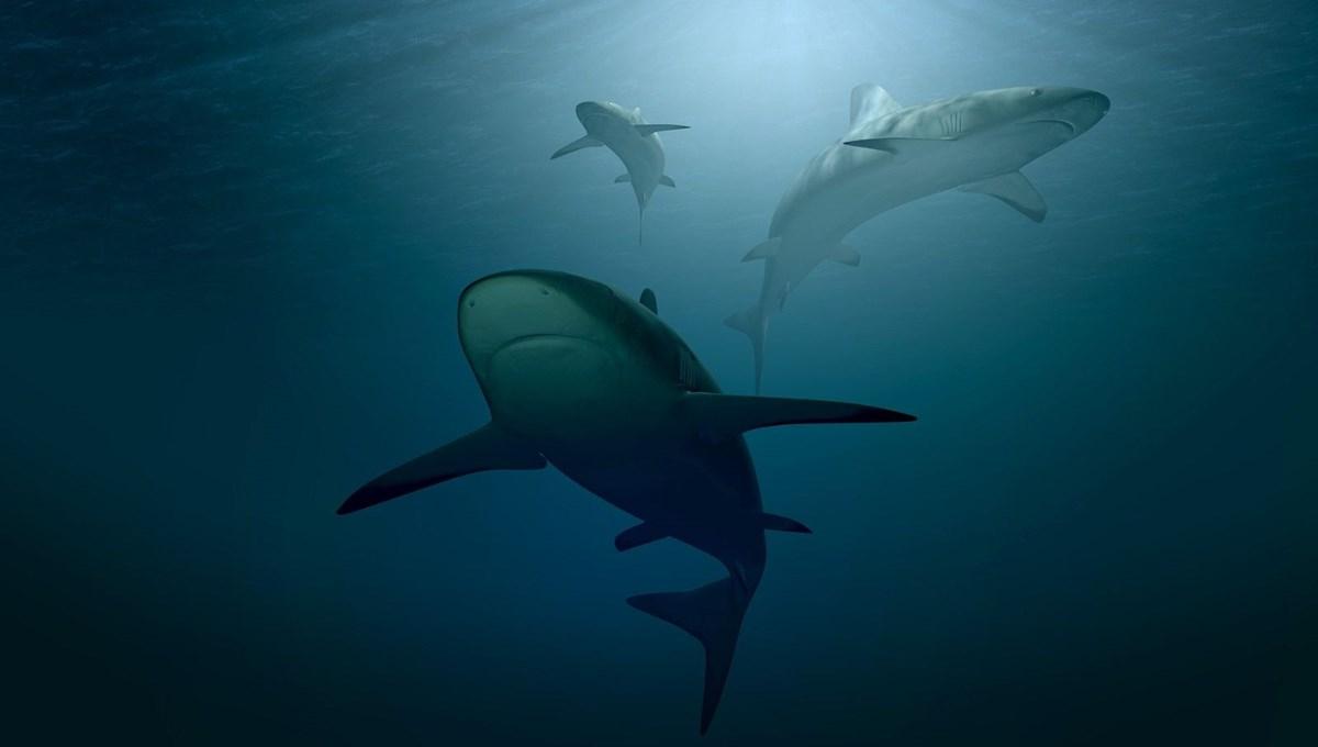 Korkutan iddia: Bir doz aşı için 250 bin köpekbalığı katlediliyor