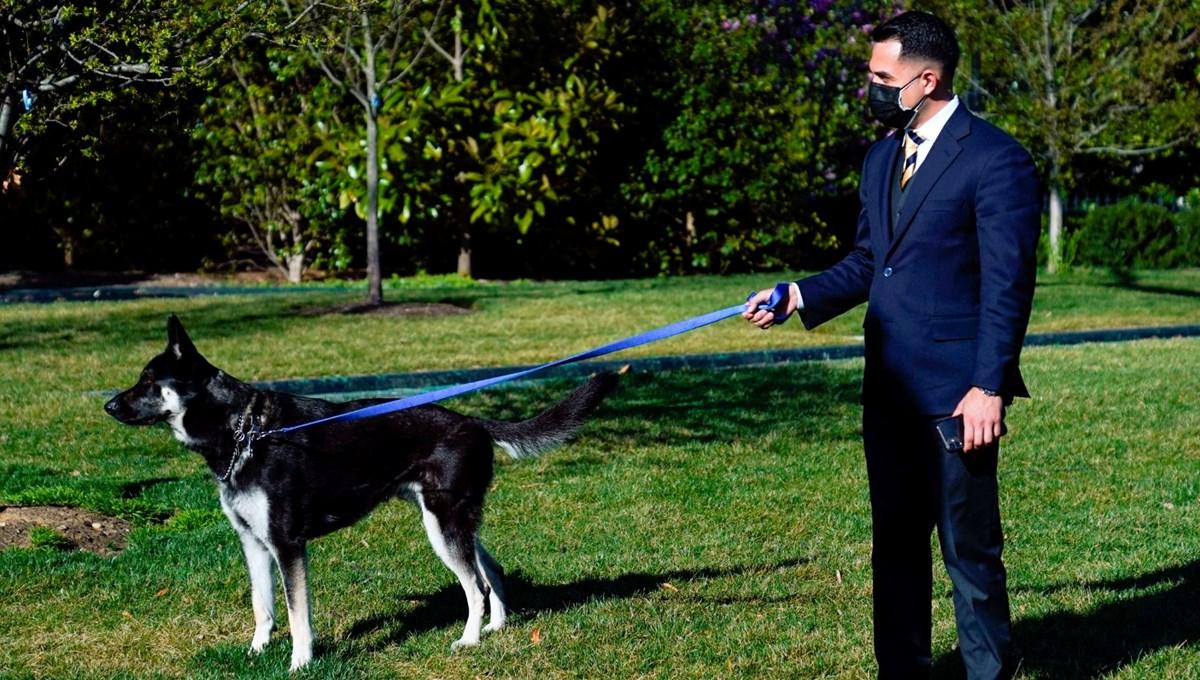 Beyaz Saray çalışanlarını ısıran Major Biden özel eğitim alacak
