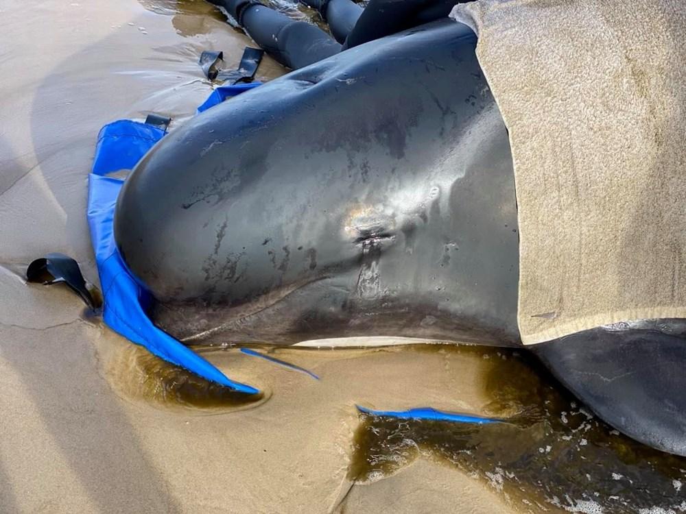 Avustralya'da sığ sularda mahsur kalan balinalardan en az 90'ı öldü - 6