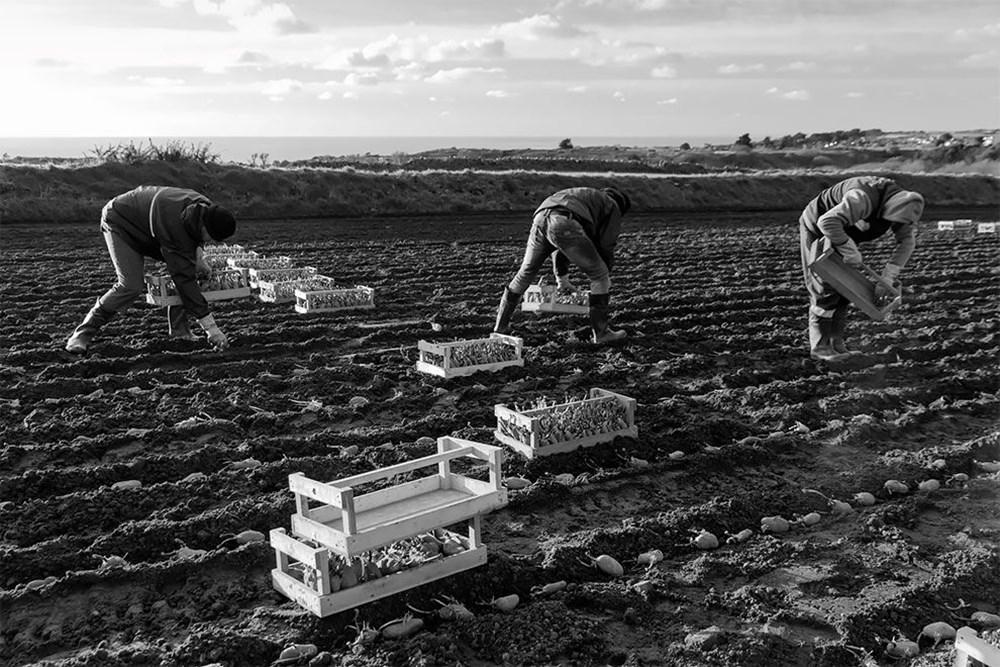 Patates Fotoğrafları Yarışması'nın kazananları belli oldu - 6