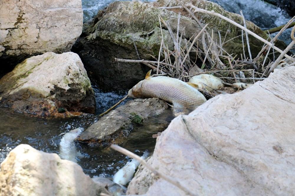 Türkiye'nin en uzun nehri Kızılırmak'ta toplu balık ölümleri - 6