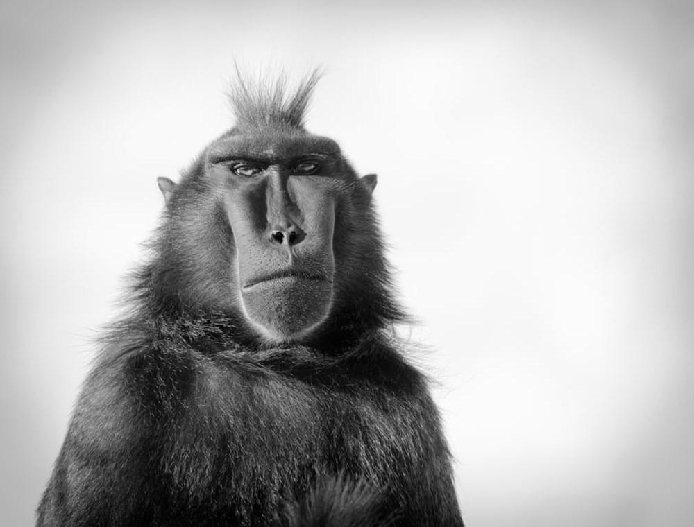 2020 BIAZA (Hayvanat Bahçeleri ve Akvaryumlar) Fotoğraf Yarışması'nın kazananları belli oldu - 2