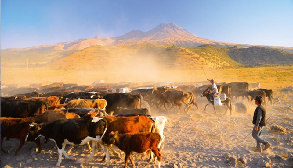 İç Anadolu'daki Hasan Dağı ve Melendiz volkanları yan yana. Köylülerin hayvanlarını otlattığı dümdüz bir platonun üzerinde ada gibi yükseliyorlar.
