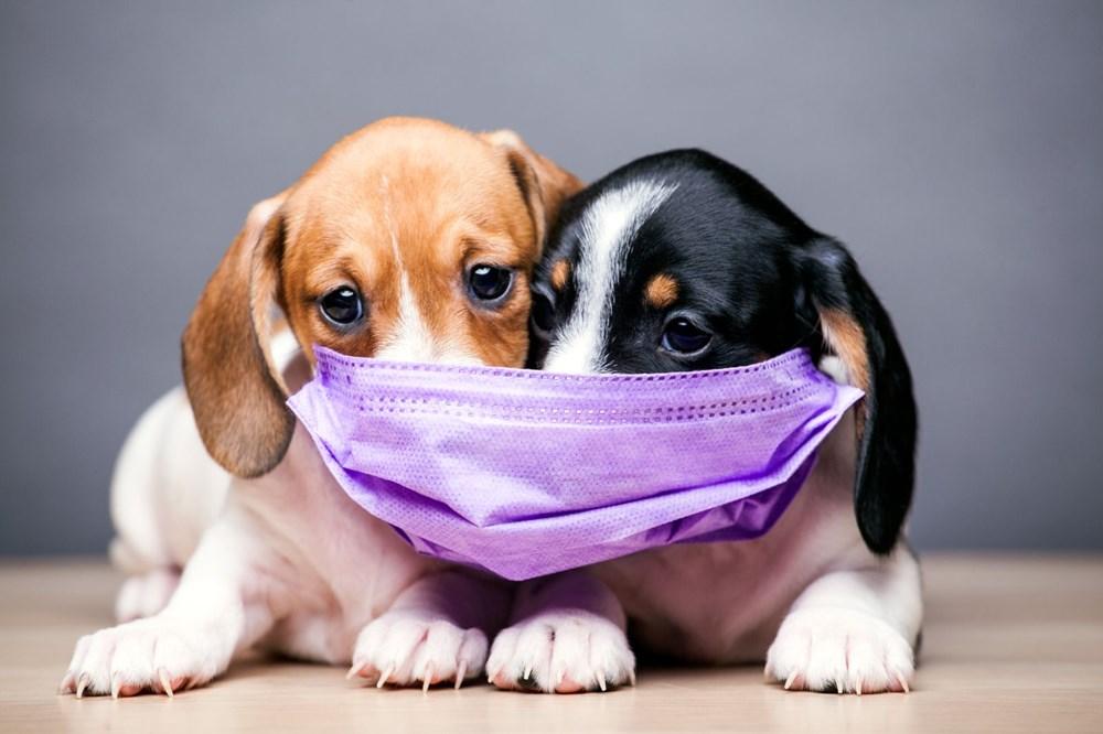 Pandemide sahiplenilen her beş köpekten biri terk edilme riskiyle karşı karşıya - 3
