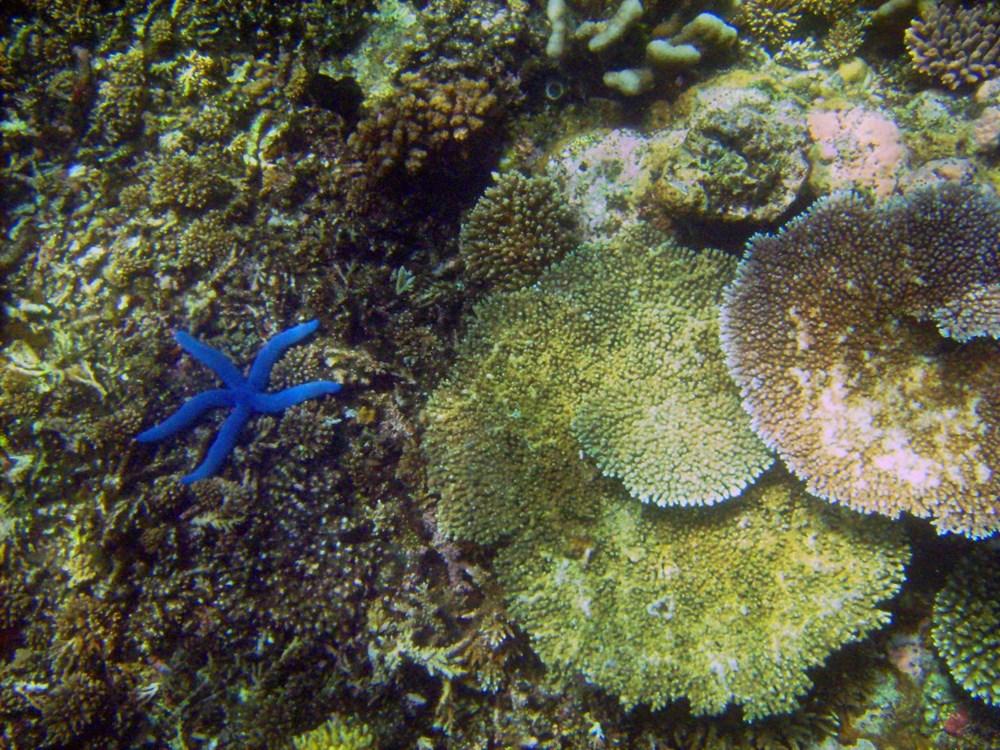 Küresel ısınma, deniz yaşamının kaynağı olan mercan resiflerini yok ediyor - 1