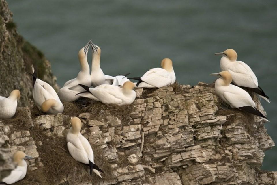 Yapılan başlabir araştırmaya göre, 1950 ila 2010 yılları arasında deniz kuşu nüfusunda yüzde 67 azalış yalandı. Bu durumun ana nedenlerinden bir tanesi ise plastik tüketimi.