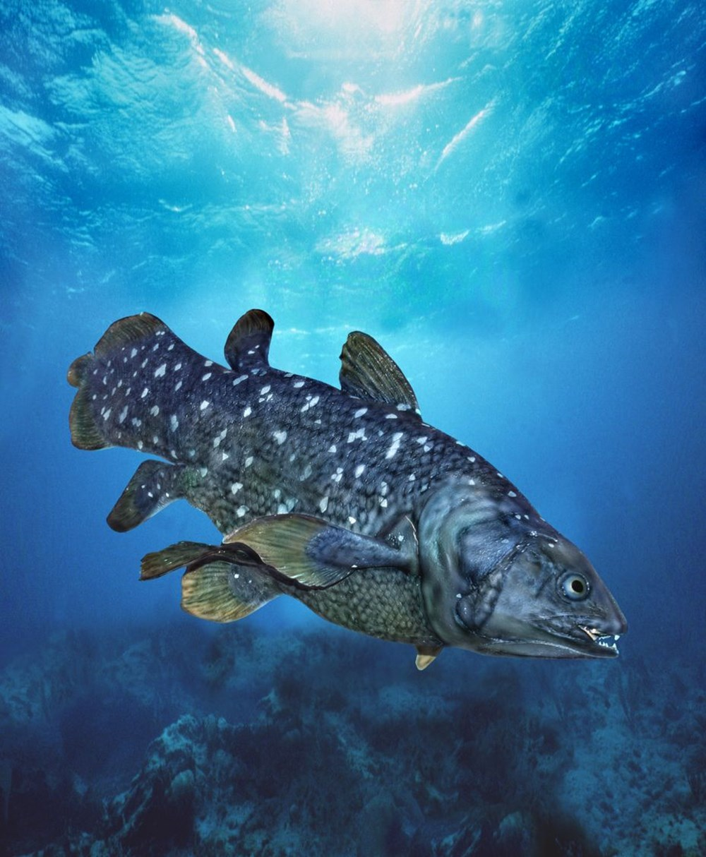 Yeni keşif: 'Yaşayan fosil' balık 100 yıl yaşıyor, hamileliği 5 yıl sürüyor - 4