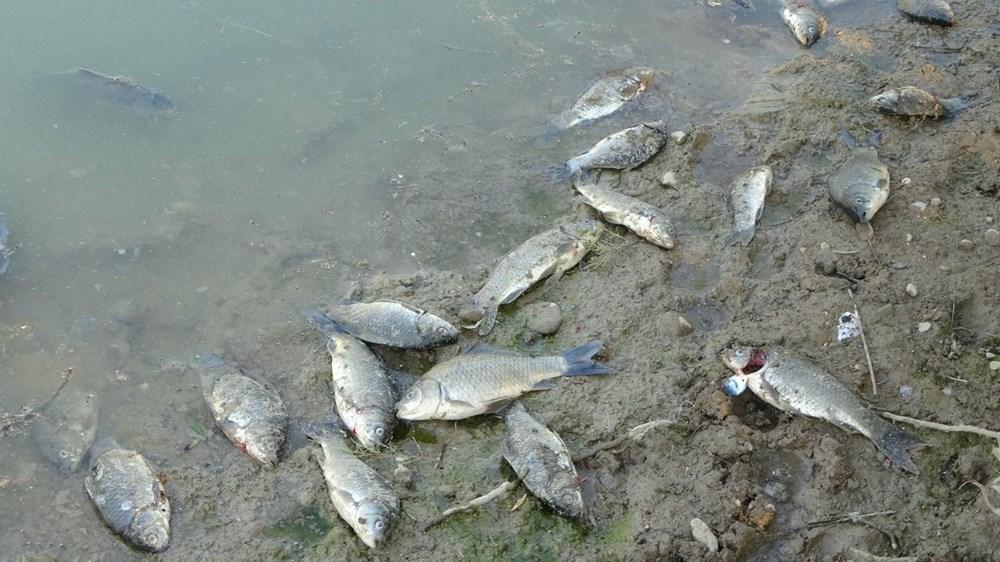 Manavgat'ta balık ölümleri - 3