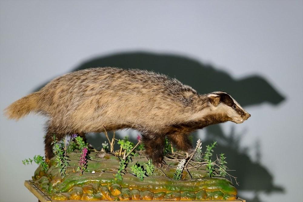 Van'da yaban hayvanları tahnit sanatıyla müzede tanıtılacak - 31