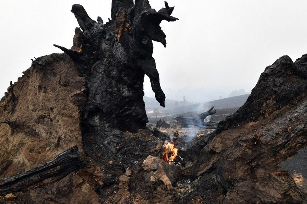 Ayrıca yangın yine yüzmilyonlarca hayvanın doğal yaşam alanını terketmesine neden oldu.