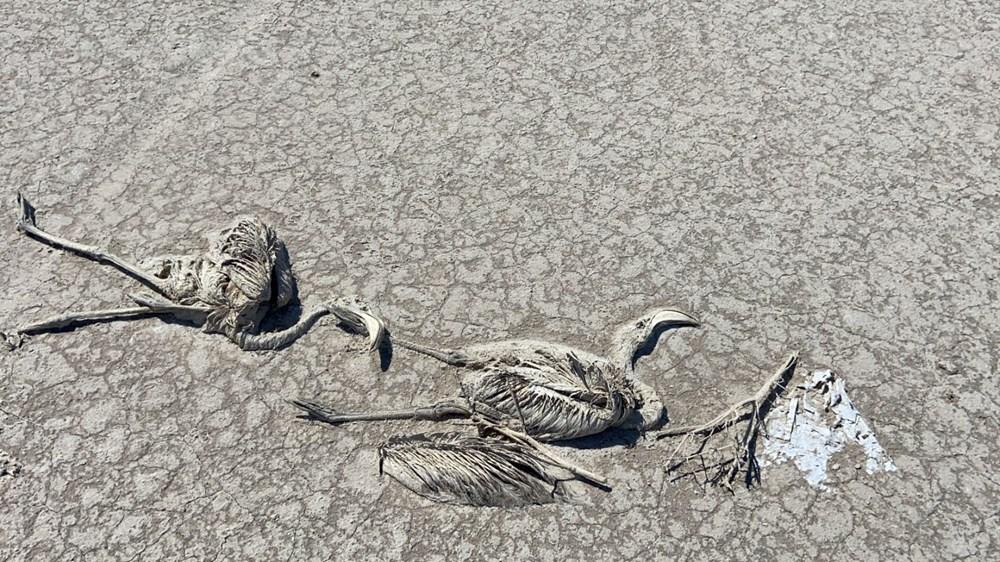 Tuz Gölü'nde toplu flamingo ölümleri: Soruşturma başlatıldı - 3