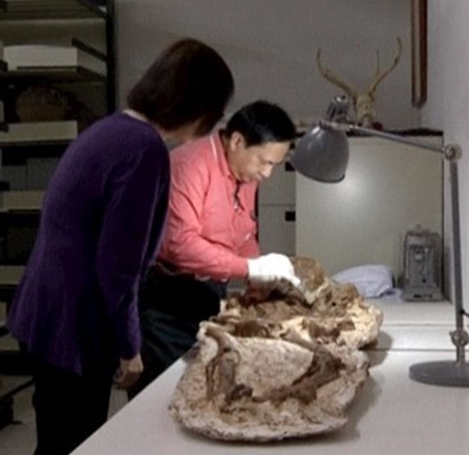 Karbon 14 testi söz konusu, fosillerin 4 bin 800 yıllık olduğunu ortaya koydu.