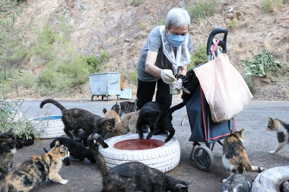 Her gün 200 sokak kedisini elleriyle besliyor - 4