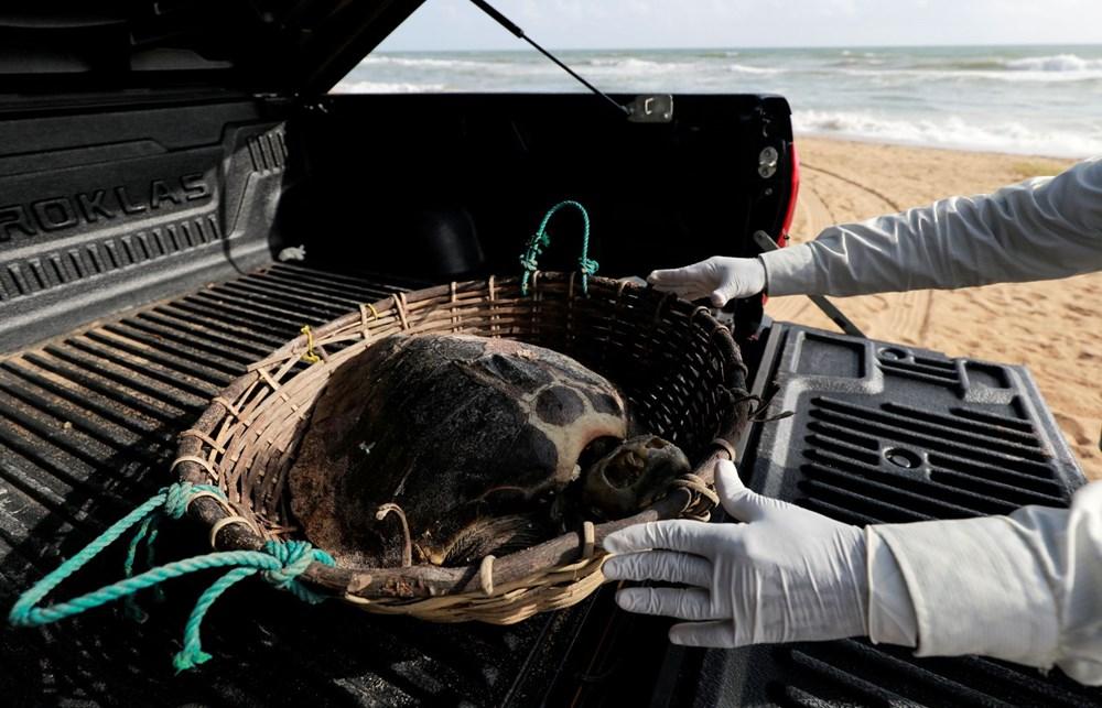 Yüzyılın en kötü çevre felaketlerinden: Onlarca yunus, balina ve kaplumbağa kıyıya vurdu - 4