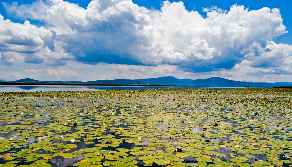 Türkiye'nin en büyük nilüfer bahçesi: Beyşehir Gölü - 1