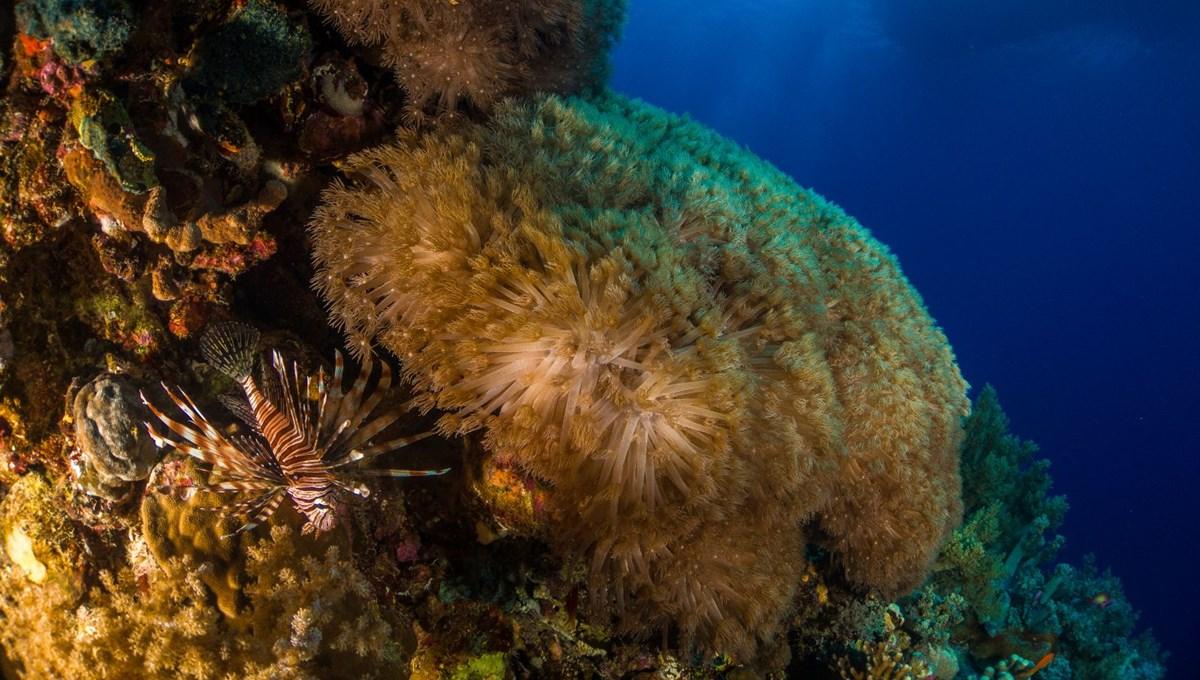 Kanada'daki aşırı sıcaklar, yüz milyonlarca deniz canlısının ölümüne neden oldu