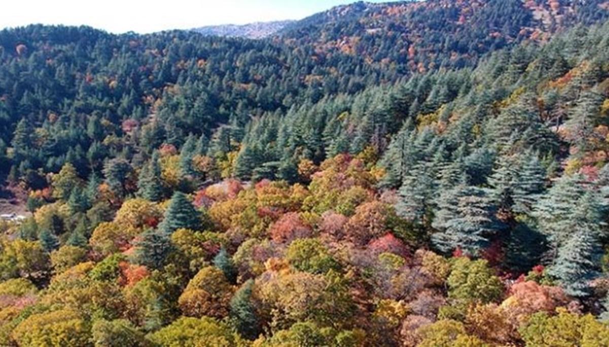 Isparta'da ormanlık alanlara girişler yasaklandı