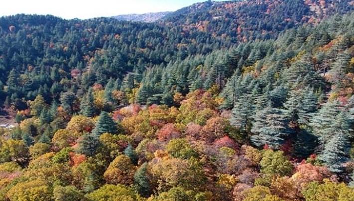 """Isparta'daki kasnak meşesi ormanı """"kesin korunacak hassas alan"""" oldu"""