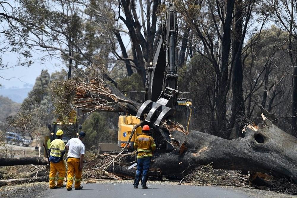 Avustralya'daki yangınlar 3 milyar hayvanı etkiledi - 6