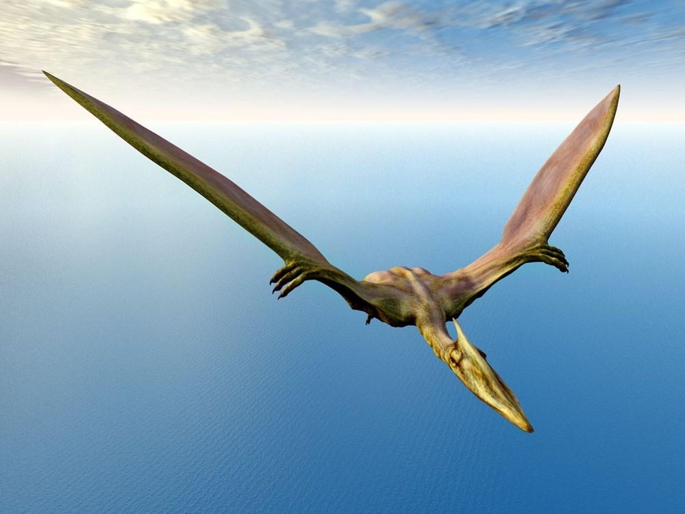 Avustralya'da 105 milyon yıllık teruzor fosili bulundu: Efsanevi bir ejderhaya benzeyen en yakın tür - 7
