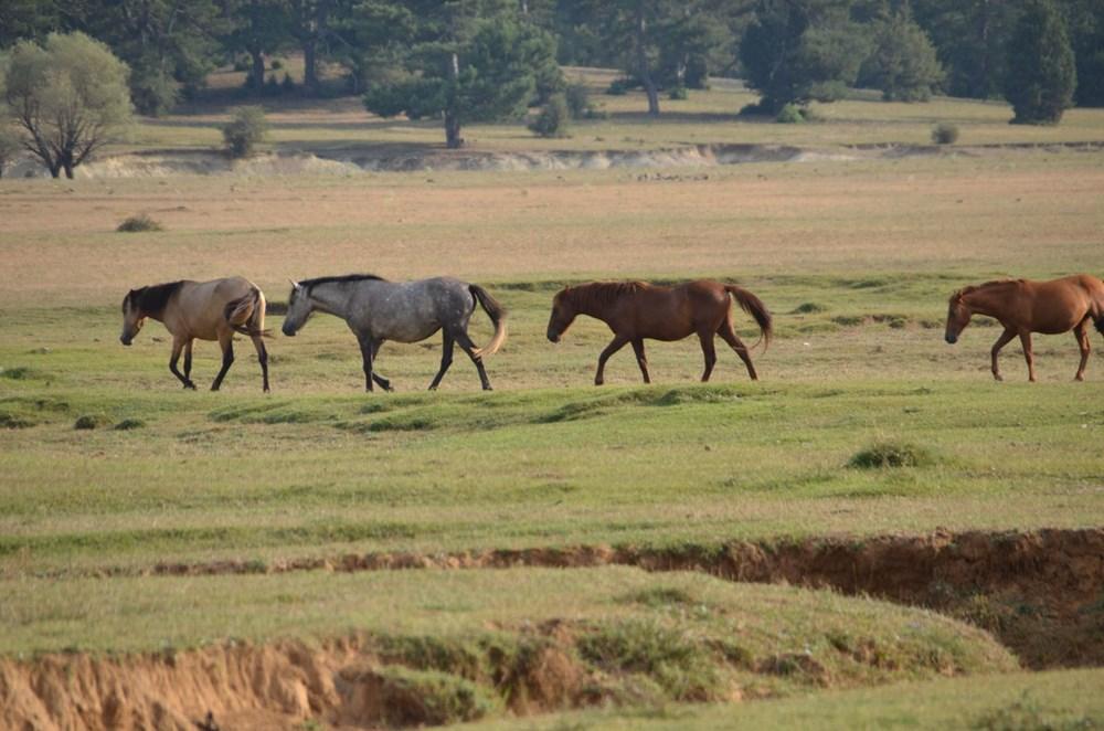 Soyları Osmanlı süvari birliğine dayanıyor! Torosların vahşi güzelliği 'Yılkı atları' - 17