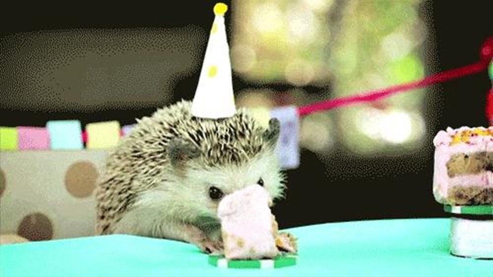 Гиф с днем рождения с животными