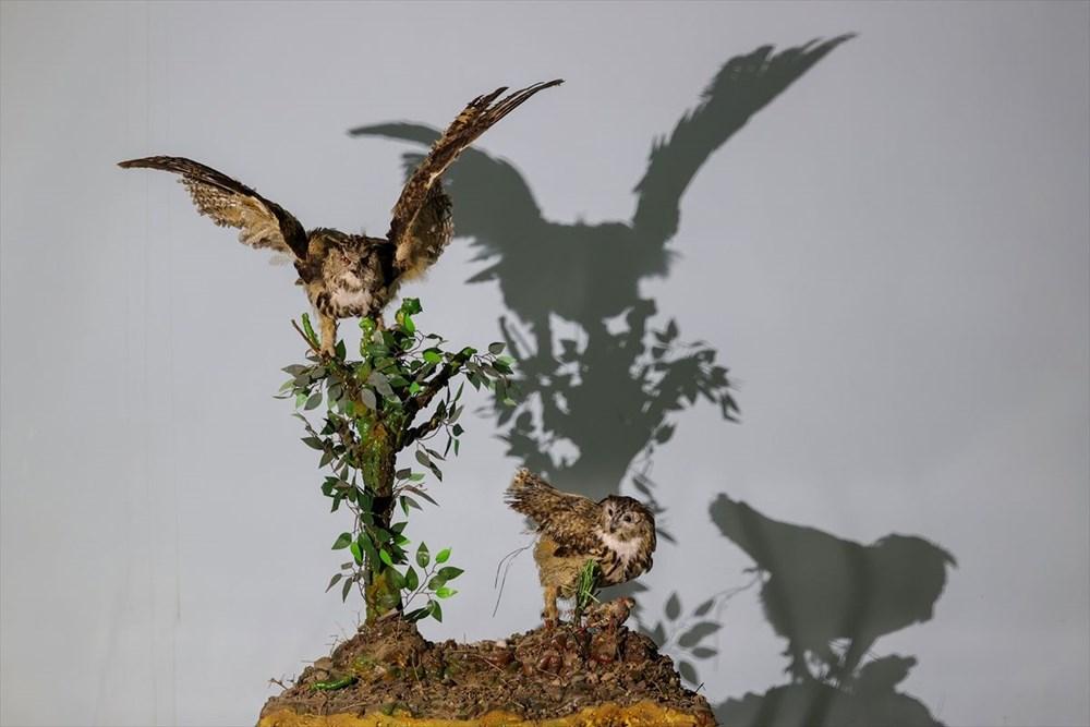 Van'da yaban hayvanları tahnit sanatıyla müzede tanıtılacak - 42