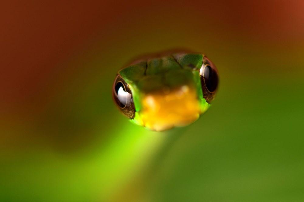 Bilim insanları 20 yeni canlı türü keşfetti - 2