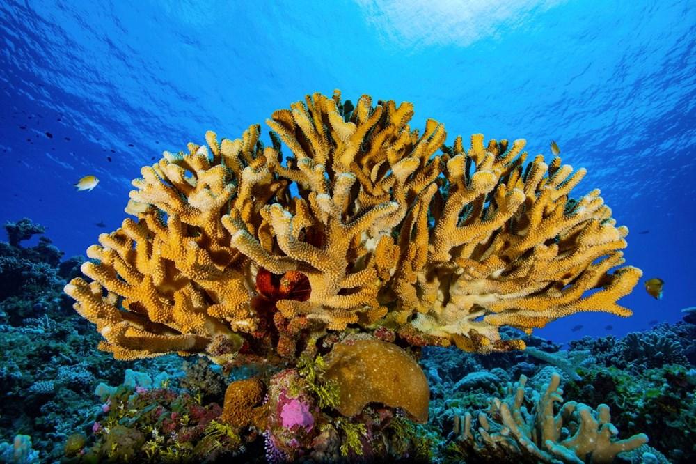Küresel ısınma, deniz yaşamının kaynağı olan mercan resiflerini yok ediyor - 6
