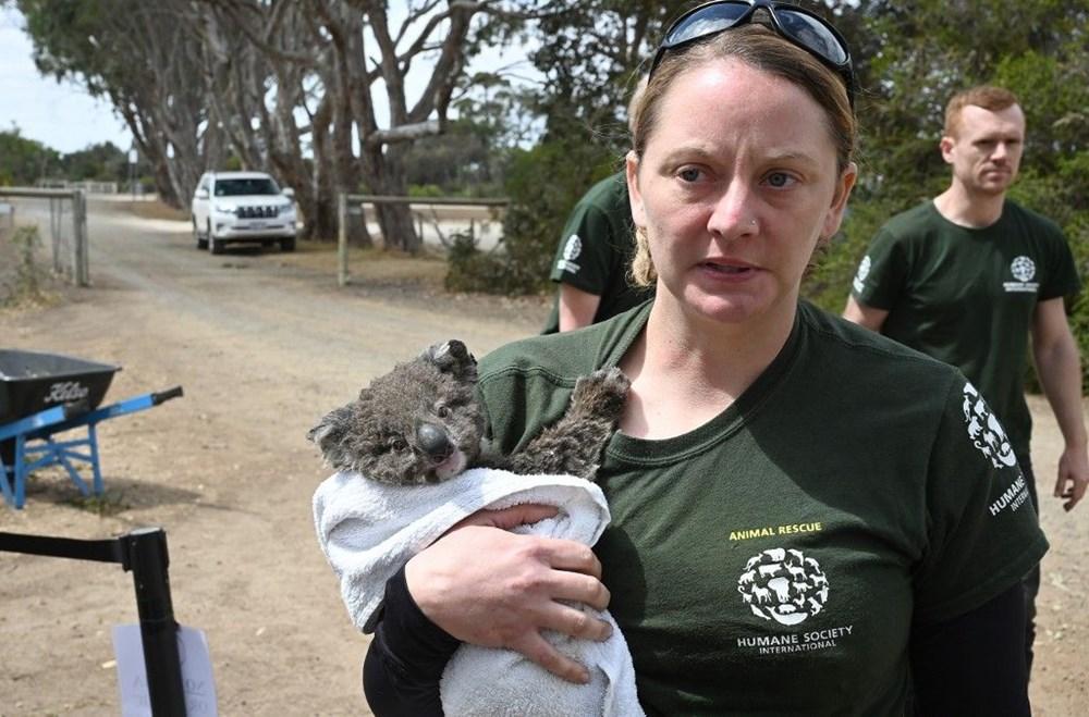 Avustralya'daki yangınlar 3 milyar hayvanı etkiledi - 3