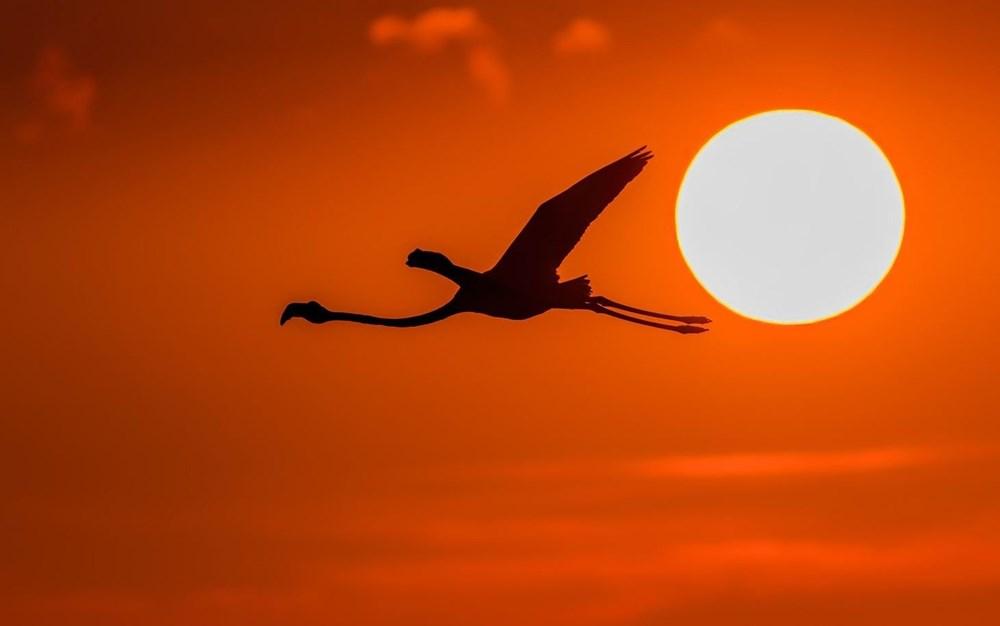 Fotoğraf tutkunu cumhuriyet savcısı 358'inci kuş türünü belgeledi - 6