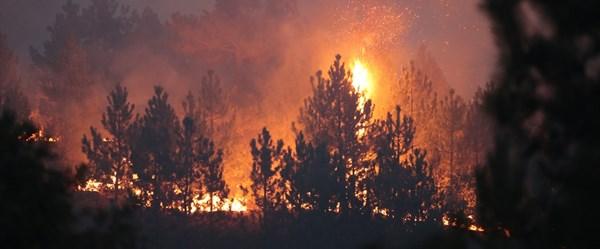 Kütahya'daki orman yangını Bilecik'in Bozüyük ilçesine sıçradı