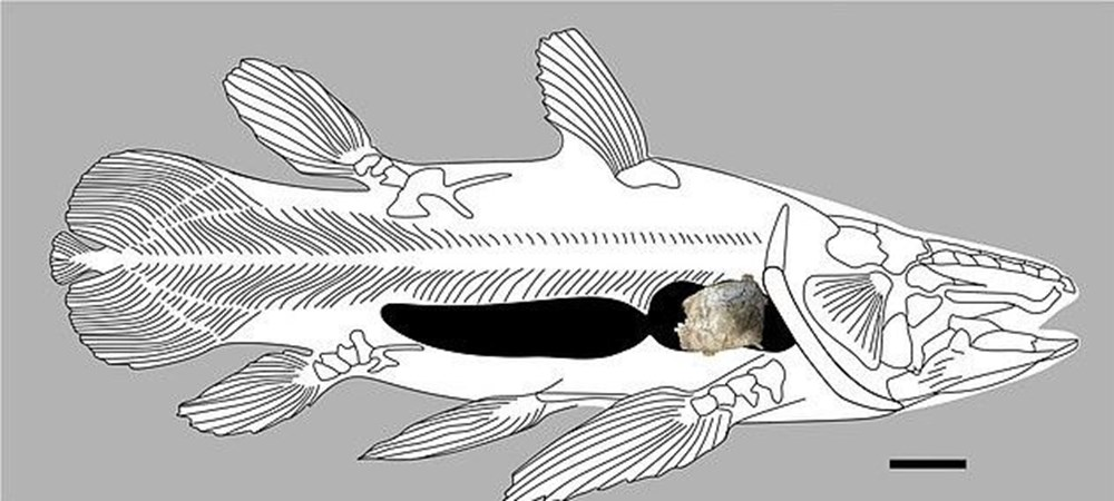 İngiltere'de 66 milyon yıllık balık fosili bulundu - 4