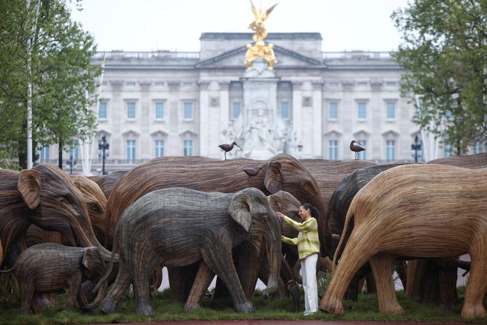 Londra'da Buckingham Sarayı önündegerçek boyutlu filler sergisi - 3