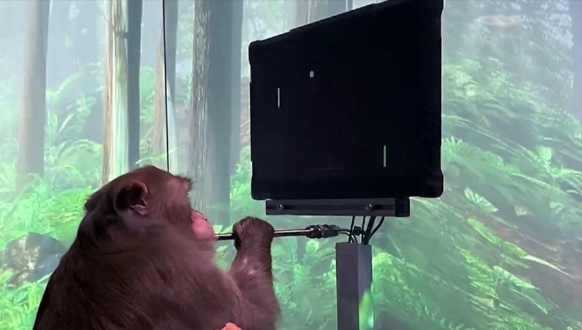 9 yaşındaki maymun beyin gücüyle oyun oynadı