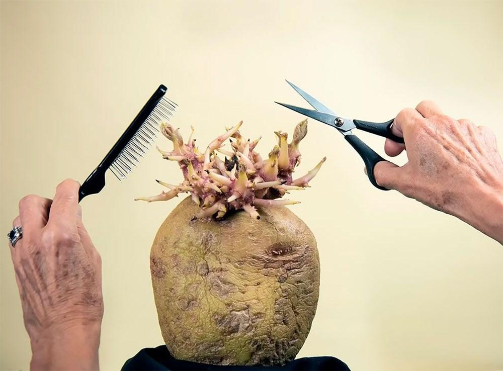 Patates Fotoğrafları Yarışması'nın kazananları belli oldu - 1