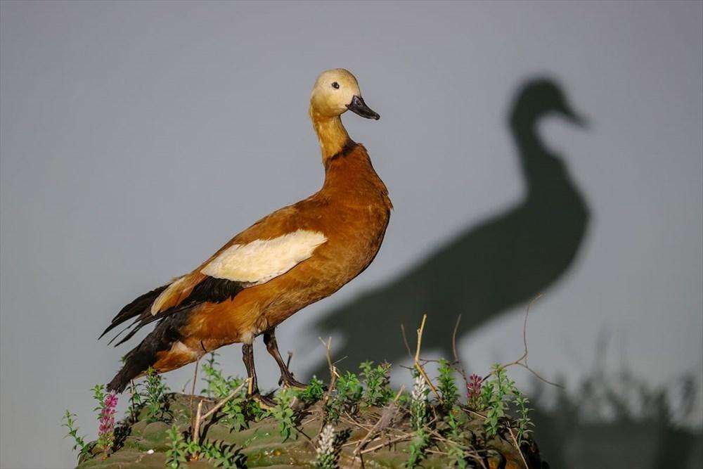 Van'da yaban hayvanları tahnit sanatıyla müzede tanıtılacak - 32
