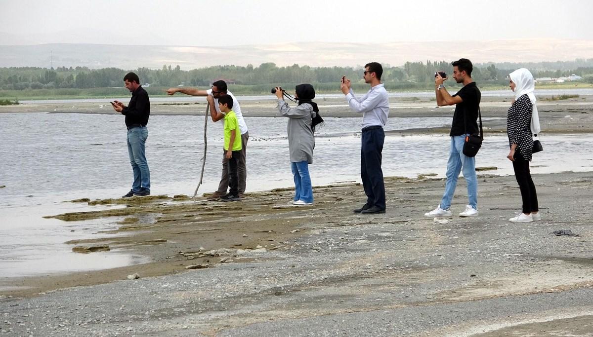Van Gölü'nde flamingo fotoğrafı için sıraya girdiler