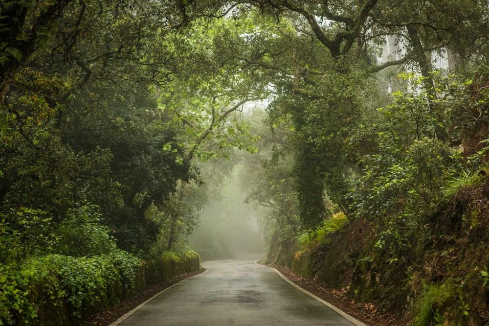 Kuraklık tehlikesi kapıda: Ağaç sayısını yüzde 20 artırmak, yağışlarda yüksek bir artış sağlayabilir - 6