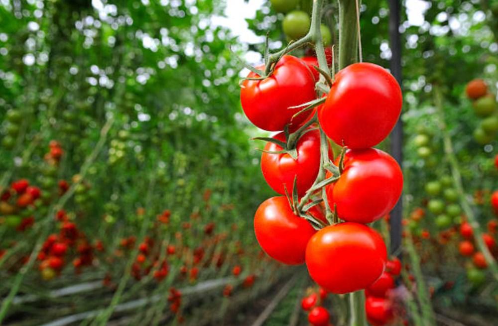 Meyve ve sebzeler hangi vitaminleri içeriyor? (Meyve ve sebzelerin besin değerleri) - 5