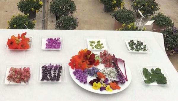 Sevgililer günü için yenilen çiçek